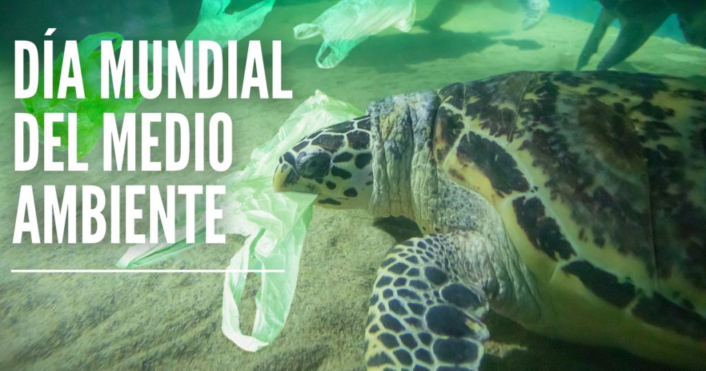 medio ambiente y tortugas